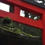 箱根神社 (九頭竜神社)ご利益 縁結び