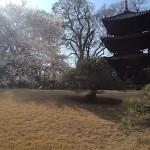 ホテル椿山荘東京から桜の季節の案内が届きました