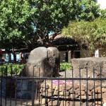 ハワイ ワイキキのパワースポット 魔法石(パワーストーン)も見たよ